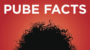 red pubic hair pictures the truth about shaving your pubes youtube