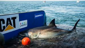 great white sharks you can track u0027em cnn travel