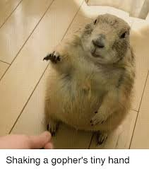 Gopher Meme - shaking a gopher s tiny hand tiny meme on me me