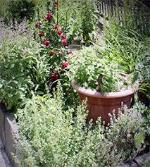 Fertilizer For Flowering Shrubs - fertilizing your garden natural vs synthetic fertilizers and the