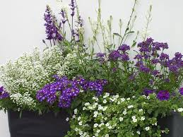 blumen fã r balkon 1060 best flowers images on garden balconies and balcony