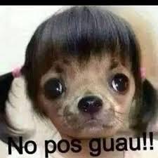 Meme Chihuahua - pretty chihuahua meme keywords suggestions for memes chistosos