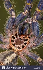 tree spider stock photos tree spider stock images alamy