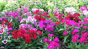 bright and beautiful flower bed a great of stock footage