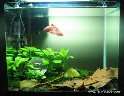plants list marimo moss christmas moss anubias nana anubias