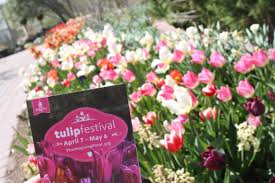 tulip festival at thanksgiving point well traveled
