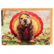 thanksgiving cards at paperchase