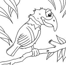funny parrot colouring happy colouring