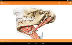 App For Anatomy And Physiology Sobotta Anatomy Atlas Android Apps On Google Play