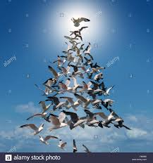 tree of spiritual concept as a of birds flying