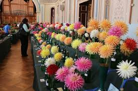 Autumn Flower Sea Of Colour As Hobart Town Hall Hosts Autumn Flower Festival