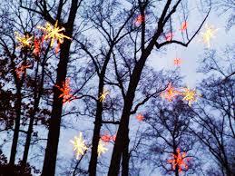 Botanical Gardens Atlanta Christmas Lights by Garden Lights Holiday Nights The Accidental Peach