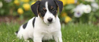 How To Train Dog To Stop Barking How To Toilet Train Your Puppy In 3 Days Love That Pet