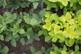 green plants green plants save nitrogen without sacrificing photosynthetic