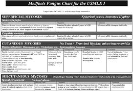 icu report sheet template free downloads scutsheets patient trackers patient info sheets