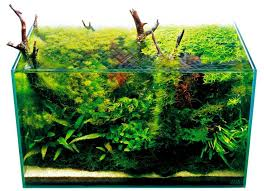 Aquascaping Techniques Aquascape With Emergent Driftwood By The Green Machine