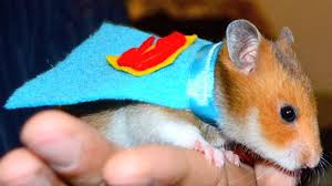 Halloween T Shirts For Dogs by 5 Halloween For Your Pet Hamster Youtube