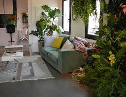 123 best exotic decor inspirations images on pinterest plants caoutchouc plante deco salon urban jungle blogger