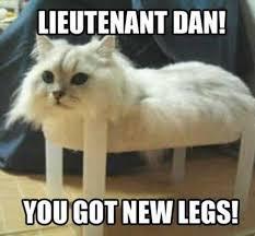 Weird Cat Meme - 37 of the best cat memes the internet has ever made