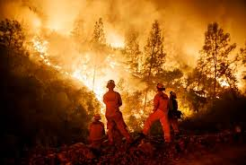 California Forest images Trump blames wildfires on california forest policy threatens to jpg