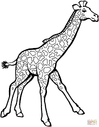 Giraffe Coloring Pages Giraffes Coloring Pages Free Coloring Pages by Giraffe Coloring Pages