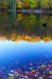 file fall foliage colors lake reflections west virginia