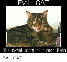 Evil Cat Meme - evil cat the sweet taste of human flesh evil cat cats meme on sizzle
