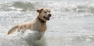 bagno per cani anche i cani possono fare il bagno nel mare di furci ordinanza