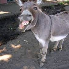 Funny Donkey Memes - funny donkey meme faces fit for fun fit for fun