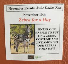 i left some fake zoo events at the dallas zoo u2013 pleated jeans