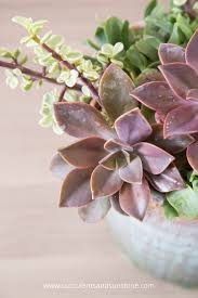 succulents meaning tips for planting succulents in containers succulents and sunshine