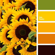 best 25 color yellow ideas on pinterest yellow yellow things