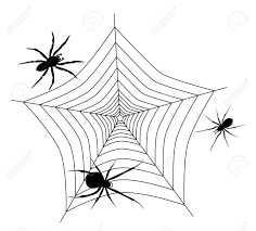 we see spider web with three different spiders royalty free