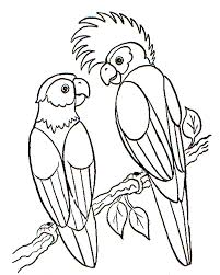 bird coloring page parrots animal coloring pages of
