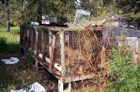 puppy mills and backyard breeders who are they and why we should