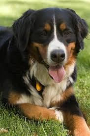 Good Backyard Pets Dog Behaviour U0026 Training Leaving Dogs Home Alone Teachers