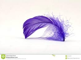 purple feather purple feather 2 stock image image of soft puff flow 24116471