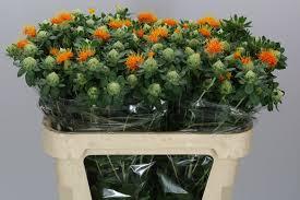 Flower Wholesale Wholesale Flowers U0026 Florist Supplies Uk Tom Brown Wholesale