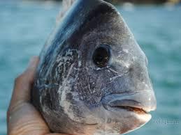 bay fishing charters empire lodge port o u0027connor tx fishingbooker
