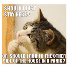 Crazy Cat Memes - 25 funny cat memes part 2 liked on polyvore featuring home home