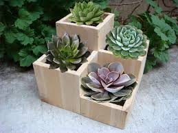 wood block planter planters pinterest tabletop planters