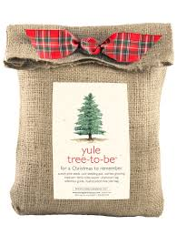 grow your own christmas tree yule tree grow kit gardeners com