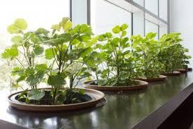 Indoor Garden Design by Horta Dentro De Casa Indoor Gardens And Indoor Greenhouse