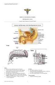 reprodactive male img img 9781587790300 male reproductive system