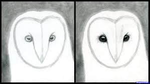 how to draw an owl head masked owl step by step birds animals