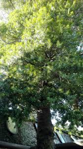 native plants christchurch 29 best helen u0026 peter images on pinterest tree line garden