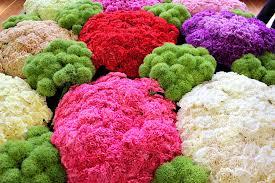 the melbourne flower u0026 garden show