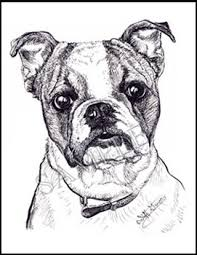 bulldog cards animal by grimes grimes