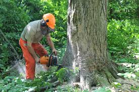 saving limbs to saving chain saw safety is more than a