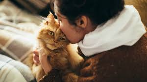 do cats actually like affection to find out we asked a vet